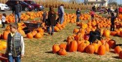 Haysville Kansas Fall Festival